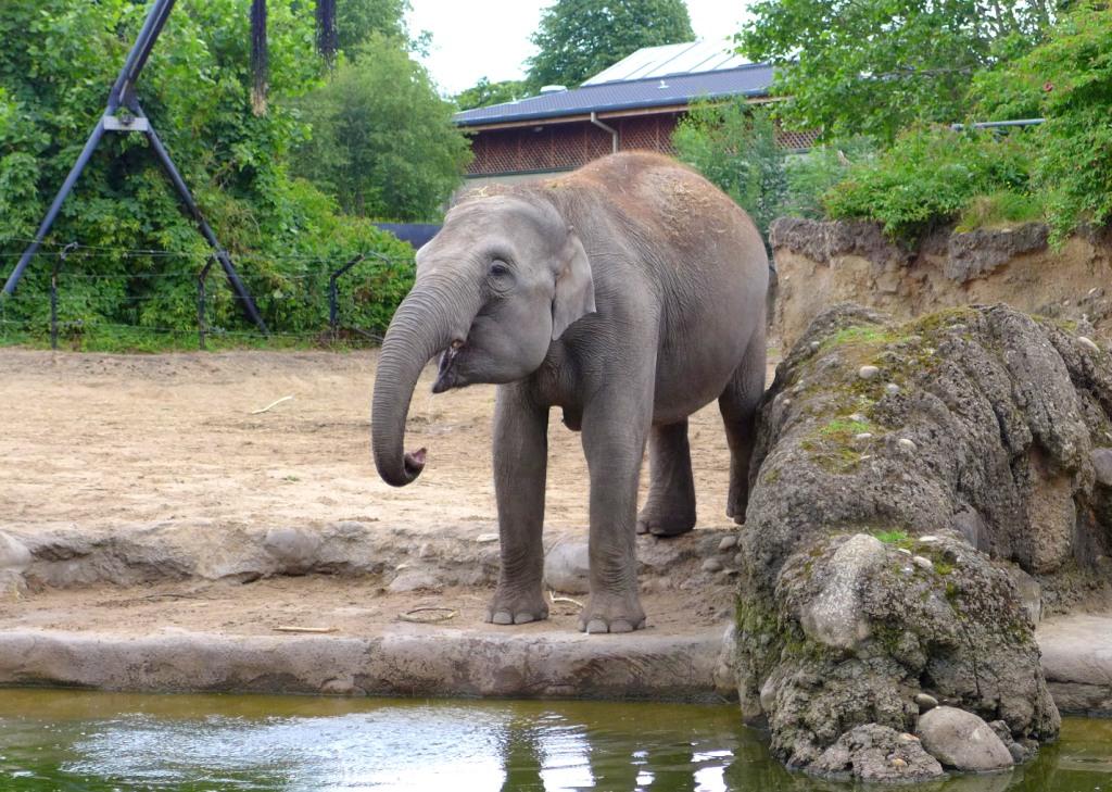 dublin for kids dublin zoo